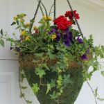 The Secret to Planting a Great Hanging Basket