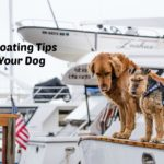 10 Tips for Boating with Your Dog