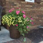 Update:  Summer Flower Pots & Hanging Basket